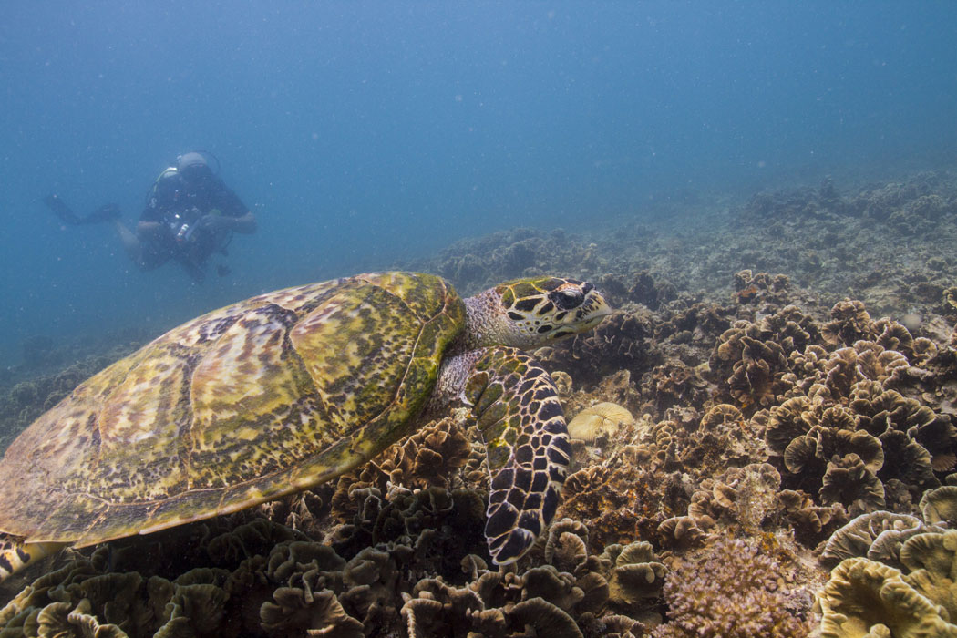 haadtien-reef-dive-centre-09